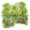 Il verde borda il pettine dei capelli (F74-3)