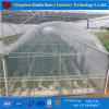 Hydroponic 온실 시스템 토마토 플라스틱 온실 갱도 온실