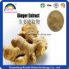 Vente en gros d'extrait de plantes / extrait de gingembre séché