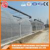 Estufa Plástica Multi-Span Comercial da China