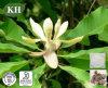 Extrait d'écorce de magnolia Magnolol, Honokiol et diphénol