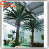 Palmeira artificial da tâmara da decoração interna verde