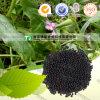 Seme naturale puro di Cowherb della medicina dell'erba di 100%