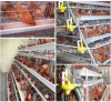 Клетка батареи птицефермы для ферм класть яичка Анголы