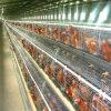3 -6 cage automatique de poulet des rangées 90-240birds pour la couche