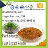 Usine l'approvisionnement direct des extraits de plantes Ficus Extrait les comprimés de poudre pour la toux