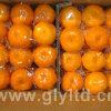 Nova produção de alta qualidade de mandarina