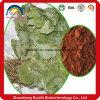 Organic Herb IncIcariin 50% 60% 80% 98% Epimedium-Auszug, horniges Ziegeweed-Auszug-Puder, Iiariin