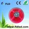 60LED/M LED 빛 지구