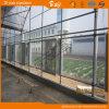 Chambre verte de film multi moderne d'envergure pour la plantation végétale