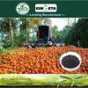 Kingeta riduce il fertilizzante organico biologico basato carbonio di diffusione di malattia
