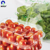 Food Transparent Grade Plastic Fart Sheet for Fruit Container