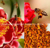 Bee Pollen,King of Pollen,Top  Puer Tea Bee Pollen, Rare,Precious, No Antibiotics, No Pesticides, No Pathogenic Bacteria, Anticancer, Health Food, Prolong Life