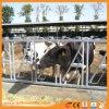 Painel do gado da alta qualidade