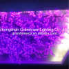 O casamento do diodo emissor de luz ilumina luzes roxas das filiais de árvore da flor de cereja