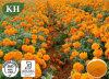 Извлеките Lutein Marigold 20%, 80%: CAS 127-40-2