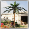 Piscina Artificial Palmeira de Coco falsos para decoração