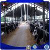 [برفب] [ستيل ستروكتثر] بناية [ديري كو] مزرعة حظيرة