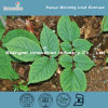 Ginsenosidesの装飾的なField Panax Ginseng Leaf Extract