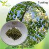 Травяное Medicine для 10:1 Moringa Leaf Powder Depression