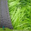 12000 het Synthetische Gras van de Voetbal van het Gras van het Gras van het Gras Dtex/van het Gras van het Gebied van het Voetbal Kunstmatige Goedkope