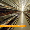 El pollo de jaulas en batería en la estructura de acero tipo sándwich de pollo granja