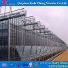 Berufsfertigung-Plastikfilm-Gewächshaus in China