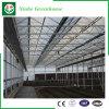 Landbouw/de Commerciële/van de Tuin Groene Huizen van het PC- Blad met KoelSysteem