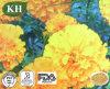 Extrait de Morifolium de chrysanthemum traitant la Vent-Chaleur, la fièvre et le mal de tête