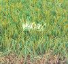 L'aménagement paysager de l'herbe artificielle L37419