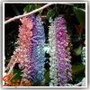 Fleurs artificielles plastiques et compétitives pour la décoration intérieure