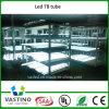 UL/AEA/certificado TUV Rizado de baja corriente de la luz del tubo LED