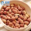 Китай Raw Groundnut арахиса для продажи
