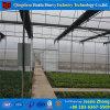 토마토를 위해 농업 겹켜 필름 녹색 집