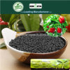 Il carbonio di Kingeta ha basato il fertilizzante composto NPK 18-18-6 per la verdura