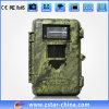 完全なHD 8MP Day and Night Color Pic DIGITAL Hunting Camera (ZSH0279)