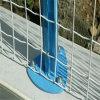 두 배 철사 안전한 용접된 메시 담 (무료 샘플)