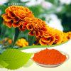 Luteina naturale dell'estratto del fiore del tagete dei coloranti del rifornimento