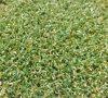 Relvado sintético para o campo de golfe (PG-10PP)