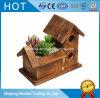 Crisoles suculentos del plantador de la pequeña de la vendimia casa de madera de encargo del pájaro