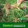 Reguladores de crescimento Humizone: ácido fúlvico 90% em pó (FA90-P)