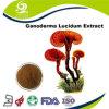 Extracto natural el 100% puro orgánico de Ganoderma con estándar del Ep