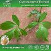 Extrait normal de Gynostemma Pentaphyllum (20%~98% Gypenosides)