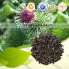 Medicina natural pura Fructus Arctii da erva de 100%