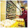 Máquina automática da coleção do ovo