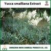 Matières premières végétales naturelles de la poudre de Yucca extrait à la saponine de 10%-60%