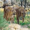 Acero inoxidable de malla de cables para Tigre, aviario / zoo malla
