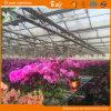 꽃 설치를 위한 자동 환경 통제 유리제 온실