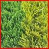 フットボールの人工的な草(S50117)