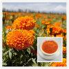 Produtos topo Marigold/Tagetes erecta P. E. a luteína, a zeaxantina